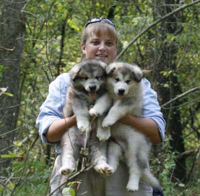Hudson's Malamutes - Sparkle and Tooter - Jolene and puppies waiting for filming to begin